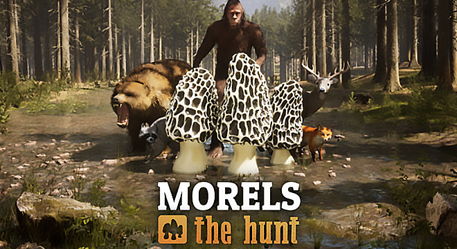 Morels: The Hunt Fast Finding Morel Spawns Guide